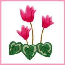flower_cyclamen_210